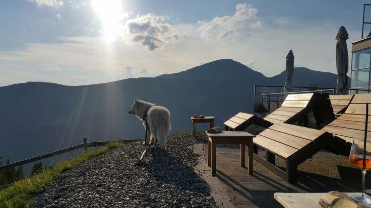 Hotelhund Samy genießt den traumhaften Ausblick im Biosphärenpark Nockberge
