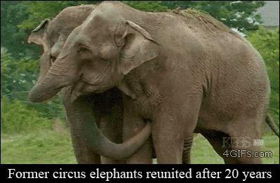 Animal hugs are best hugs
