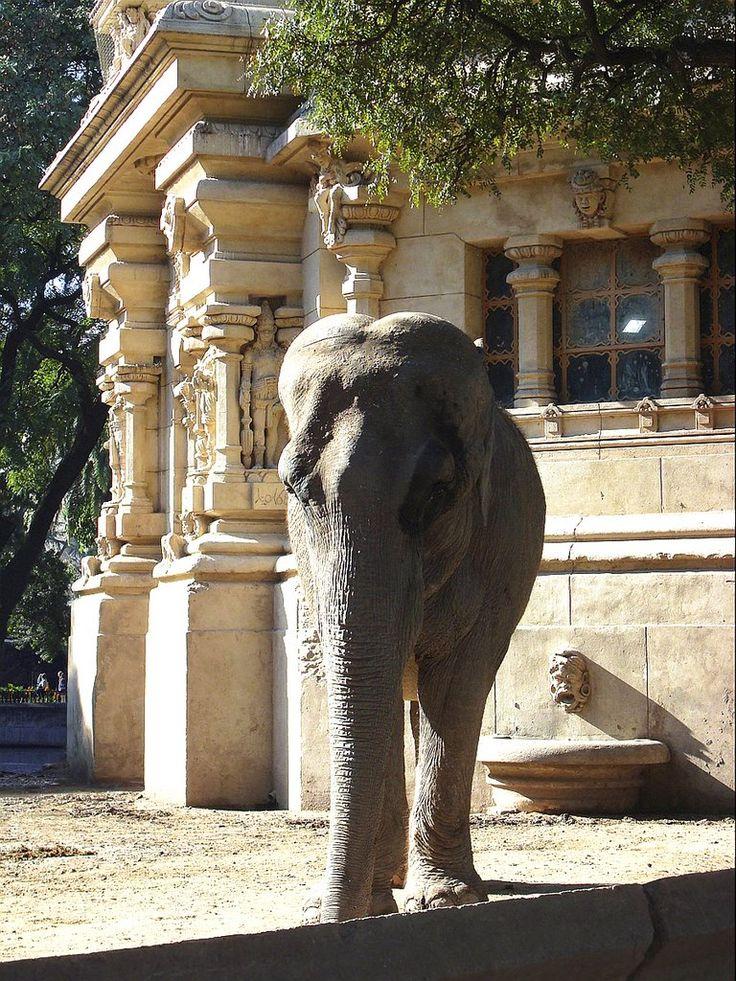 [Elefante asiático | © de Daniel Smiriglio, Todos los derechos reservados]