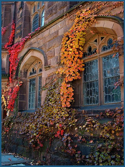 "Autumn fall colors  ""  Ivy Windows, Princeton, NJ""  photo via gripsis  """