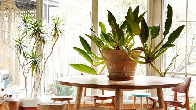 Put One Giant Plant On Your Table And Call It A Day Boho Dining