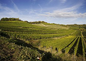 Kirchberg from SALWEY, a Great Pinot Noir made in Germany