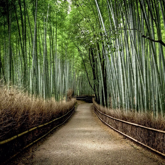 Sagano Banboo Grove, Japan