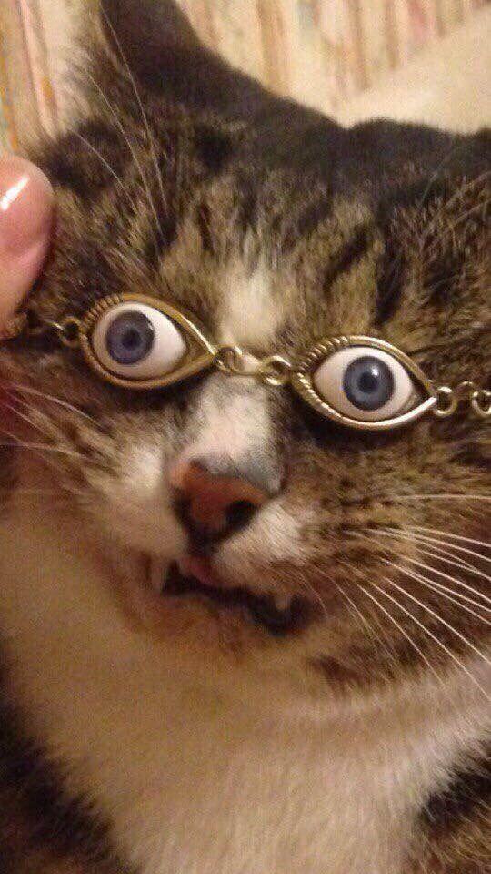 Terrible Cat Memes