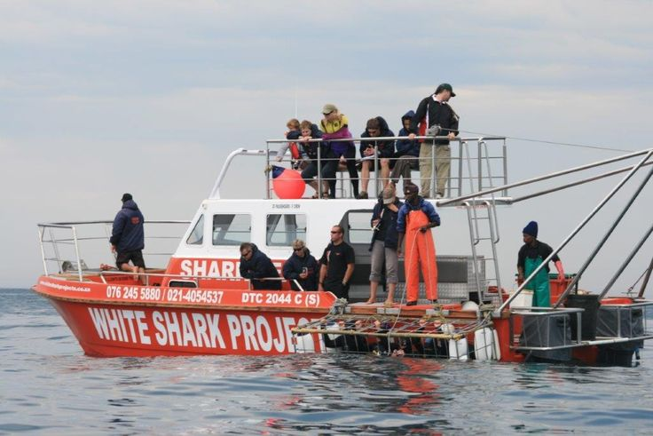 Shark cage diving only 2 hours from Cape Town. White Shark Projects in Gansbaai, South Africa www.dirtyboots.co.za #dirtyboots #sharkdiving #capetown