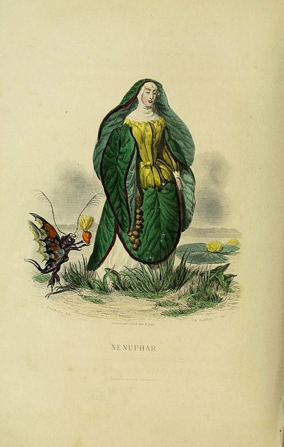 Image by the great Parisian cartoonist J.J Grandville from his Les Fleurs Animées – his last work, originally published posthumously in 1847, the year of his death.Flower Personified, The Flower, Grandville, Cartoonist J J, Fleur Animé, Parisians Cartoonist, Public Domain, Originals Publishing, Domain Reviews