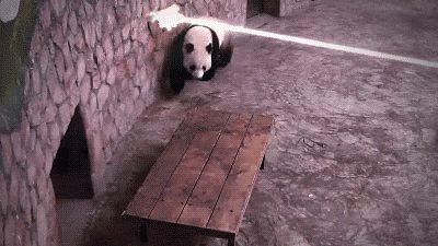 Panda Under Heavy Fire