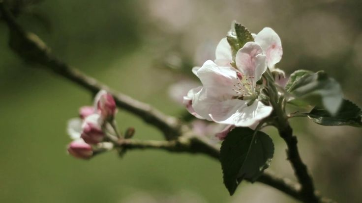 The Journey Of The Apple - Sandford Orchards