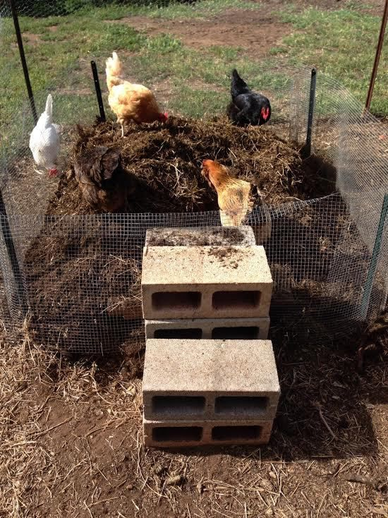 composting with chickens - Gardening Timing