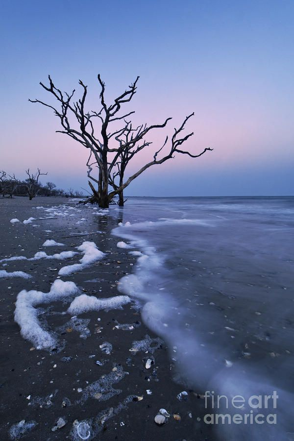 37 best Edisto Island, love this place... images on Pinterest   Edisto island, Vacation places ...