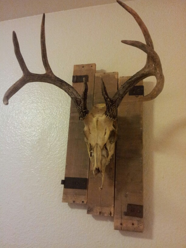 Pallet wood european deer mount painted skulls and for Turkey fan mount template