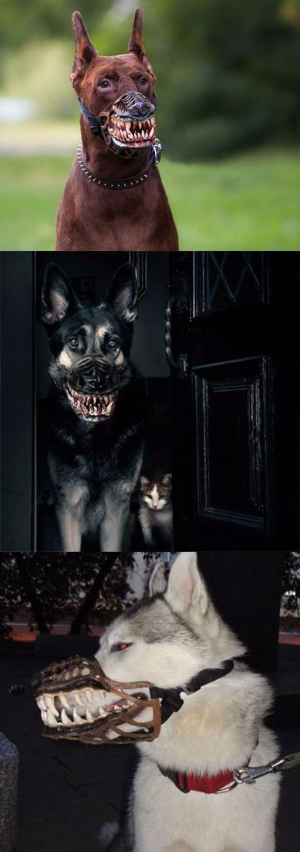 Werewolf Dog Muzzles @thistookmymoney