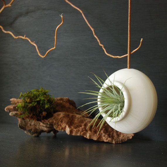 Hanging Flower Baskets Canadian Tire : Best images about tillandsia air plants on