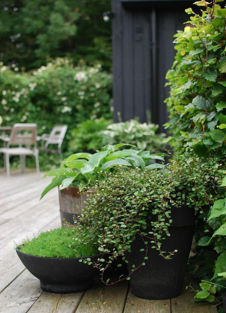 Container gardening, soft container, green garden