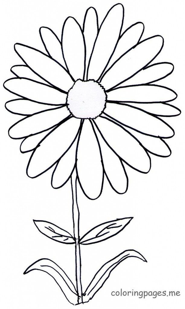Daisy Flower Coloring Pages Pictures To Color Page Free On