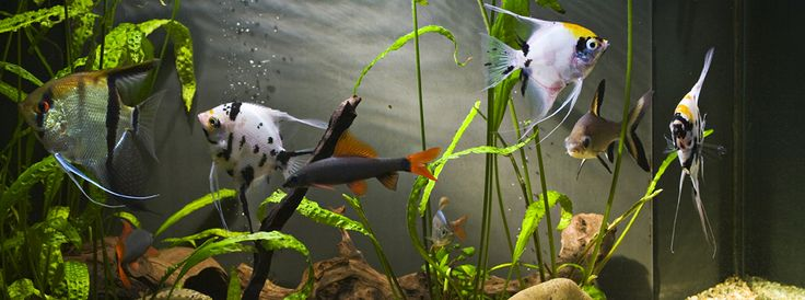 JuTa-akvaariot, JuTa Design-akvaariot, Pori