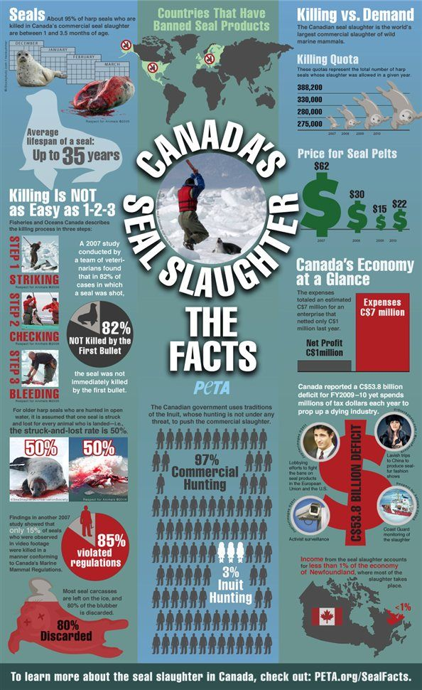 Great infographic from PETA about the bloody seal slaughter that has just begun again in Canada.
