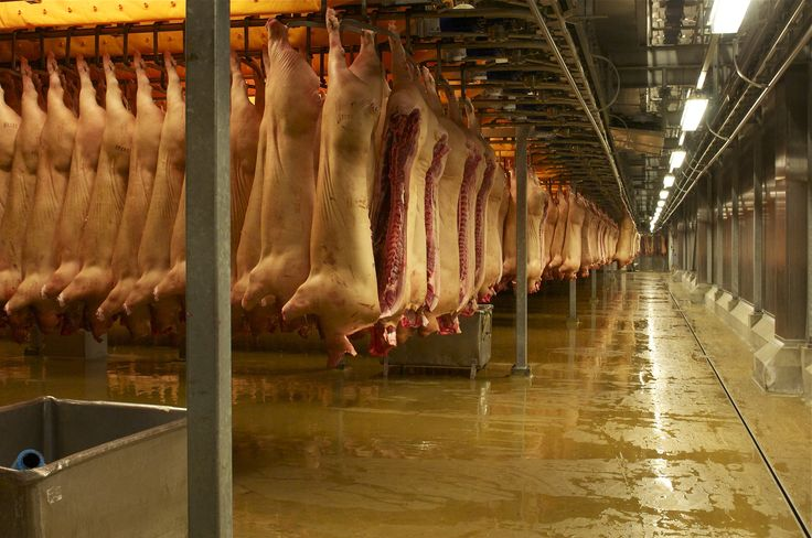 Meat processing technology and application