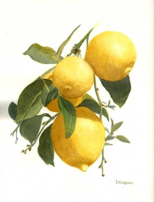 """""""Lemons"""" by Lenora Turbanic, Wheeling // Botanical watercolor painting of lemons on the tree. // Imagekind.com -- Buy stunning fine art prints, framed prints and canvas prints directly from independent working artists and photographers."""