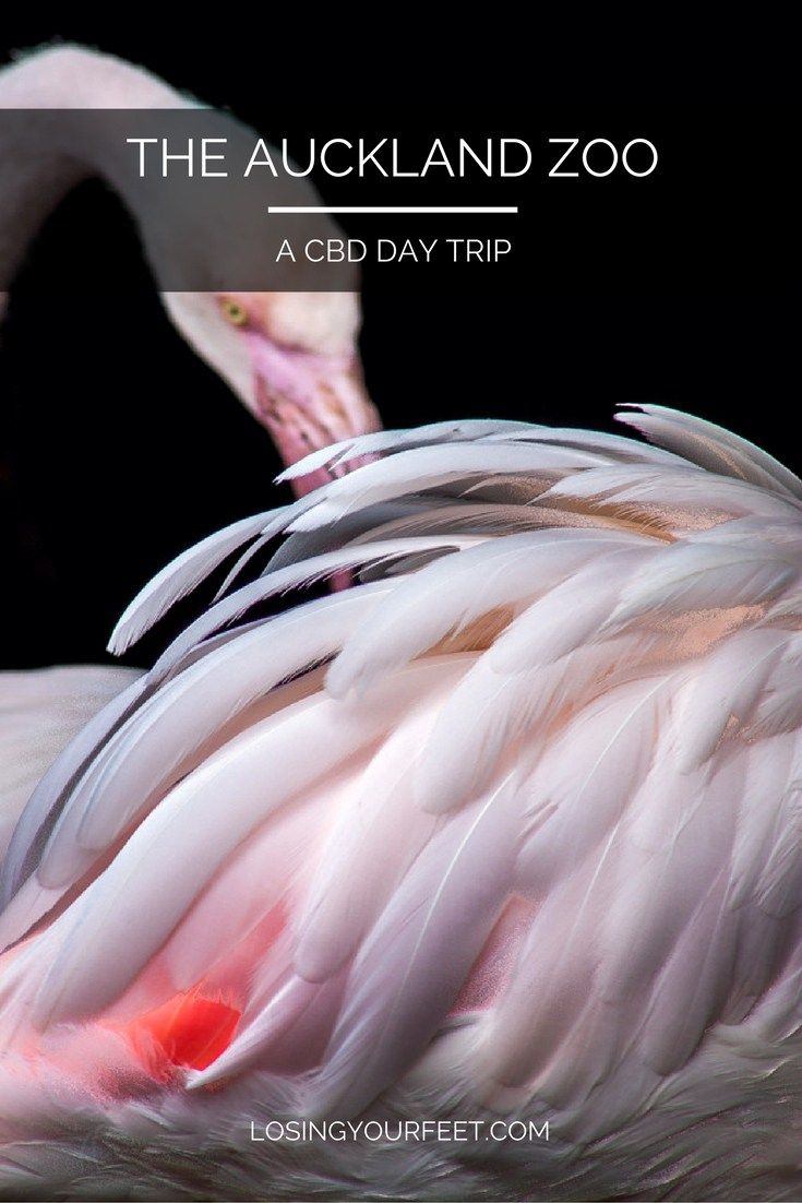 Need a day trip from Auckland that doesn't involve ferries or long drives? The…