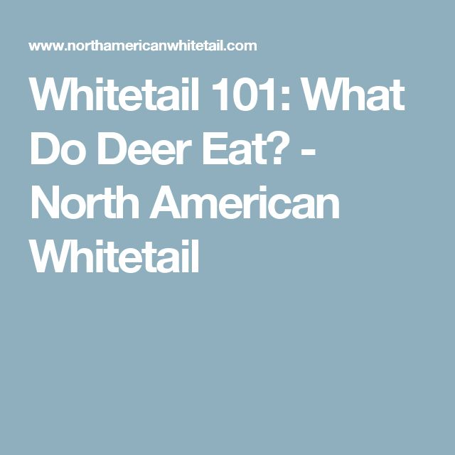 Whitetail 101: What Do Deer Eat? - North American Whitetail