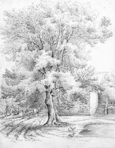 Sketch of an ash tree at Duffryn, by Lucy Bacon, 19th century