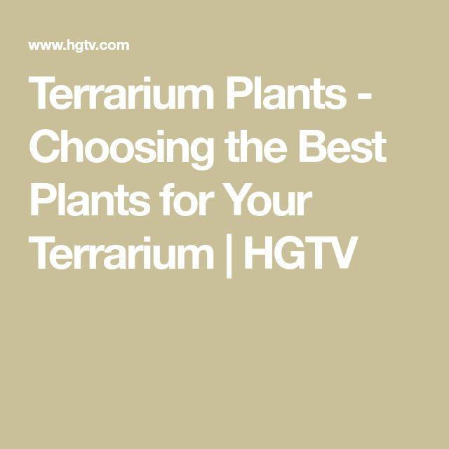 Terrarium Plants - Choosing the Best Plants for Your Terrarium | HGTV
