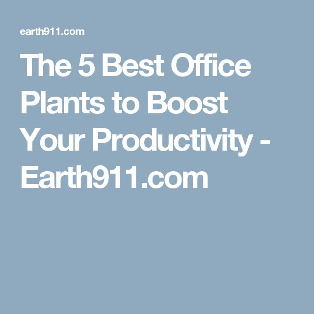 The 5 Best Office Plants to Boost Your Productivity - Earth911.com