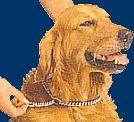 Dog Times - Adestramento Virtual - Como ensinar o seu cão a andar na guia - JUNTO