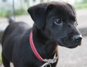 Patterdale Terrier Maybe I Ll Get One Again In Honor Of