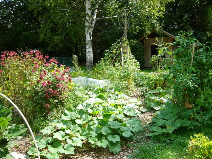 17 best images about oldfield back yard ideas on for Permaculture garden designs