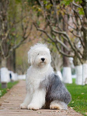 This doggie makes me smile....tooo cute!!!