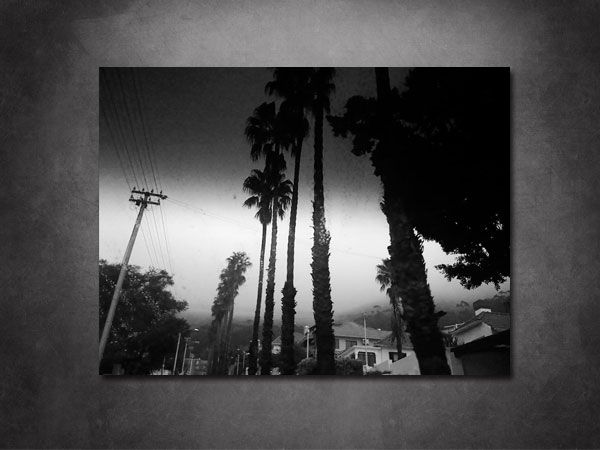 Black Palms - Lost in Capetown By Joachim Hoest Puchase on the Website