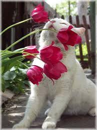 """Résultat de recherche d'images pour """"j'aime les chats"""""""
