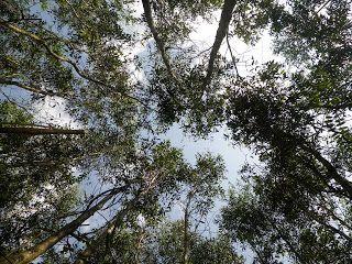 Still life !?: 『海外の森林と林業』に掲載されそうだよー