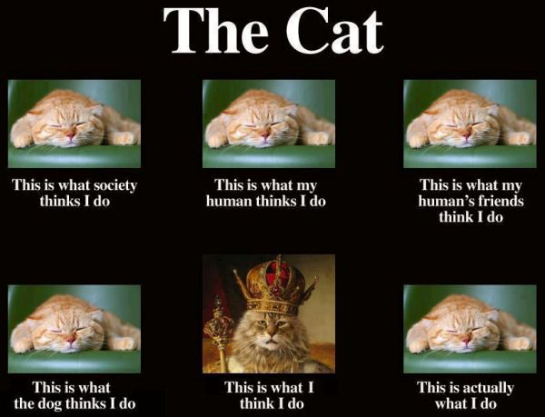 What do you think cat's do?
