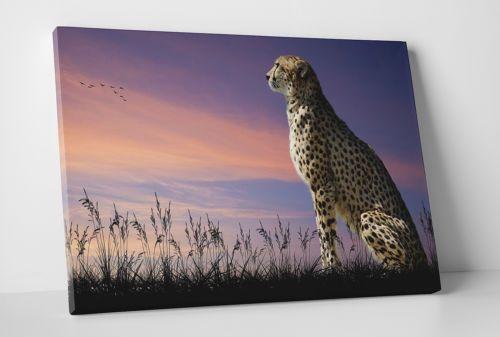 Cheetah on Watch. Modern wall art canvas print. HQ!