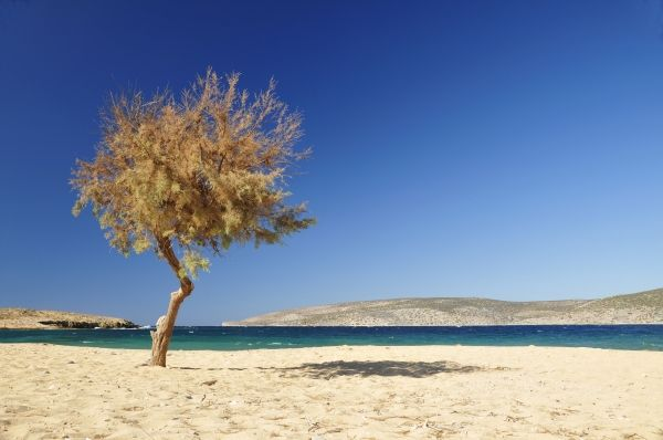 Tree on the beach