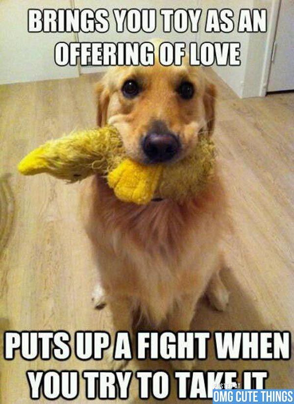 Funny Dog Joke Meme : Dog meme cute pinterest funny animal and