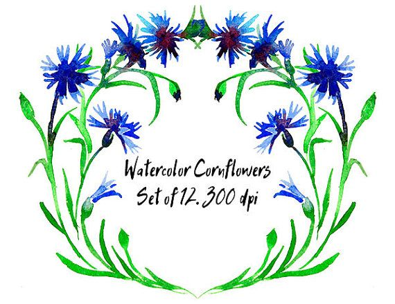 Watercolor Cornflowers. Hand painted. от VectorGraphicArts на Etsy