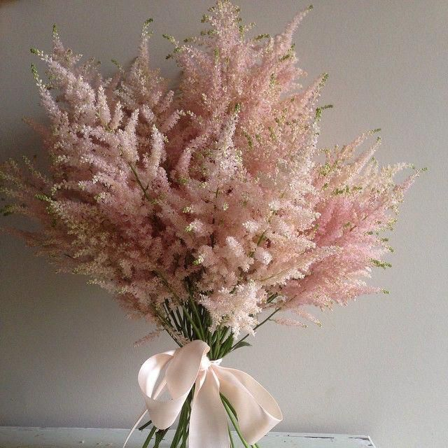 Astilbe Aschajolie Astilbe Bouquet Dried Flower Bouquet Astilbe Bouquet Flowers Bouquet