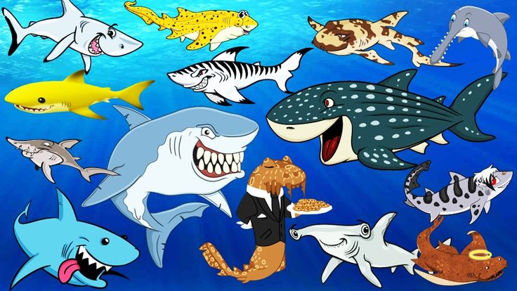 Learning Sea Animals SHARK Names with Cartoon & Real Water and Sea Anima...