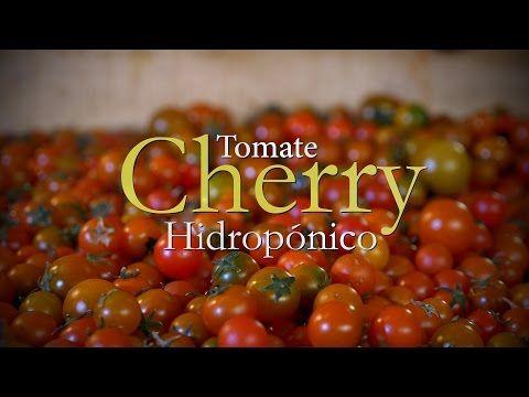 Cómo se Desarrolla un Cultivo de Tomate Cherry Hidropónico - TvAgro por Juan Gonzalo Angel - YouTube