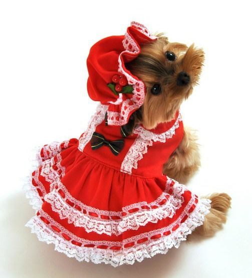 Mrs. Claus Halloween Costume For Dogs