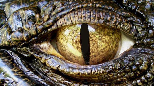 45 best l alphabet street images on pinterest alpha bet crocodile eyes google search altavistaventures Choice Image