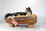 Animal beds made out of vintage suitcases