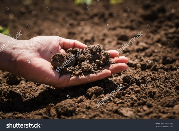 Soil, Cultivated Dirt, Earth, Ground, Brown Land Background. Organic Gardening, Agriculture. Nature Closeup. Environmental Texture, Pattern. Mud On Field. 写真素材 418925836 : Shutterstock