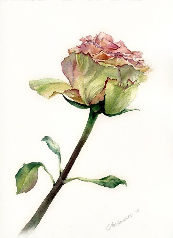 Ekaterina Logvinenko. Watercolor. 2015. #watercolor  #акварель #flower #rose