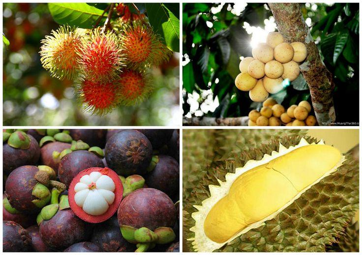 http://dreamdestinations.tourismthailand.org/
