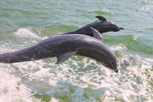 Sanibel Island Attractions- Top 7 Eco Activities